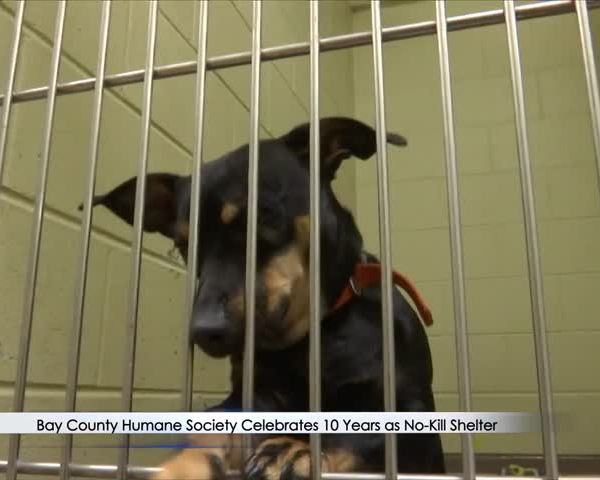 Humane Society Recognizes 10 Years as No-Kill Shelter