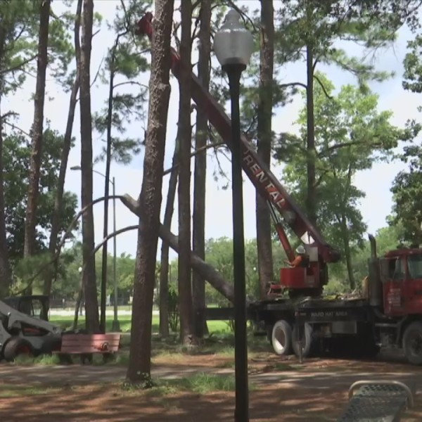 30 Trees Removed