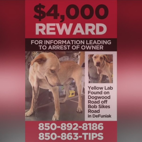 $4,000 REWARD FOR INFO ON ANIMAL ABUSE