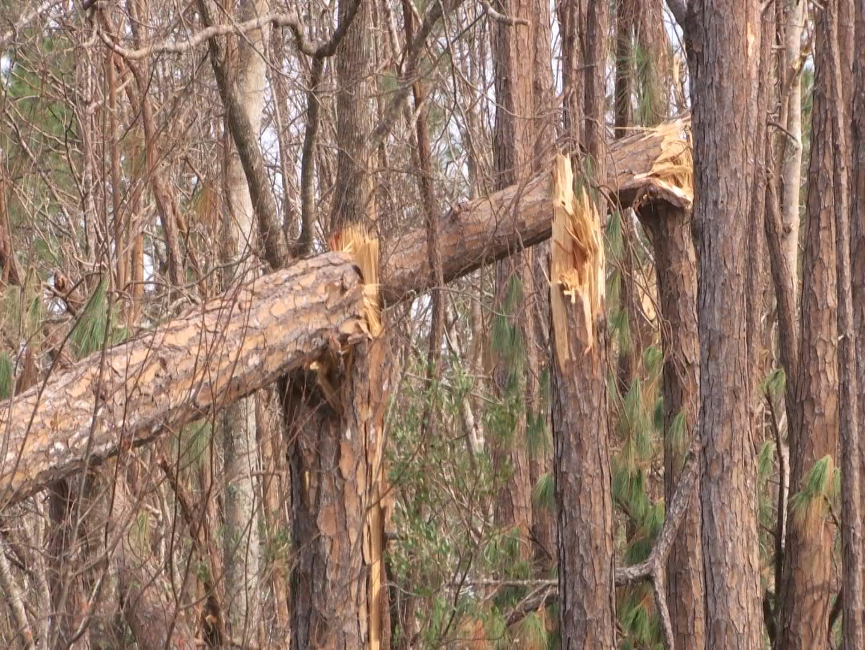 snapped trees_1540273348096.jpg.jpg