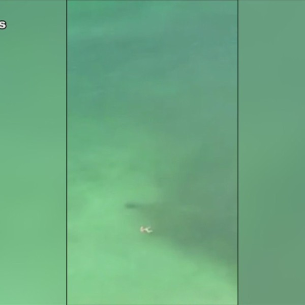 SHARK_NEAR_PCB_SWIMMER_0_20190530132033